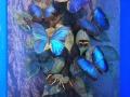 Mariposas del Centro de Miraflores en Panamá