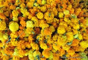 Somos hermosas flores de Ralph Fröhlich