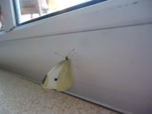 Mariposas sorpresa en la casa