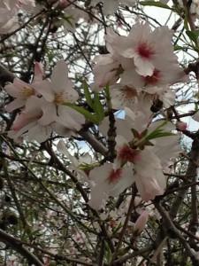 Incluso las ramas secas dan hermosas flores