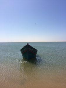 un-barco-con-la-compania-de-una-gaviota