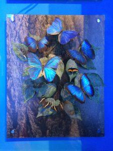 mariposas-del-centro-de-miraflores-en-panama