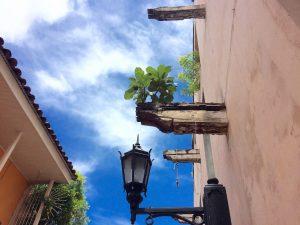 muchas-iglesias-se-quemaron-y-la-ciudad-tambien-ahora-crecen-plantas