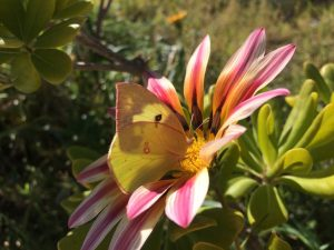 las-mariposas-vuelan-libres-en-juarez-ajenas-a-lo-que-creamos-los-hombres